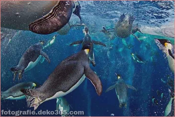 Gewinner des Wildlife Photographer_5c9065db708c9.jpg