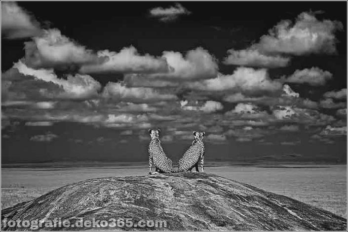 Gewinner des Wildlife Photographer_5c9065ddcf8bb.jpg