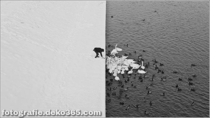 20 verrückte Fotos, von denen Sie nicht glauben, dass ... (9)