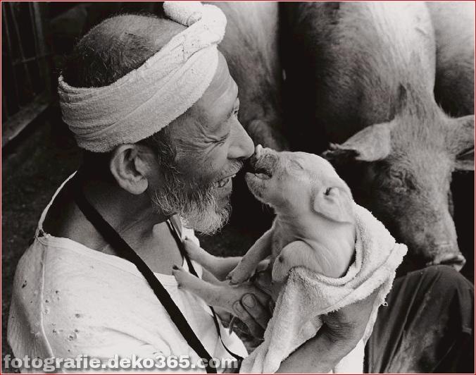 Landwirt und seine Schweine Freundschaft (1)