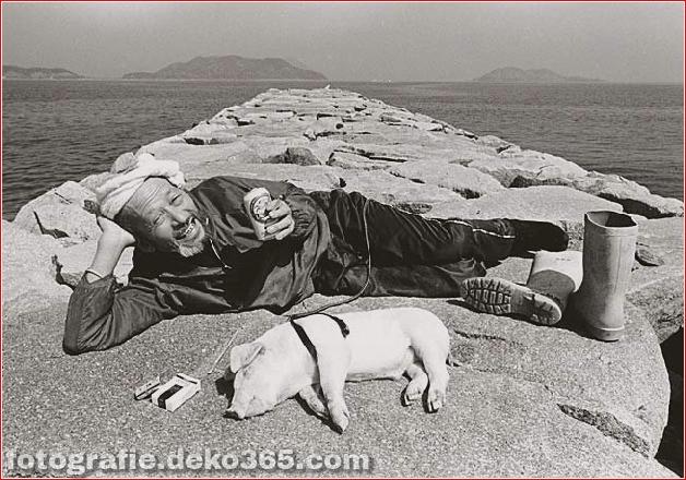 Landwirt und seine Schweine Freundschaft (3)