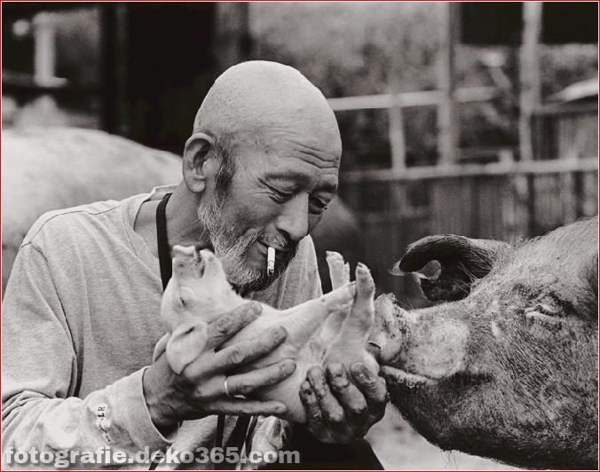 Landwirt und seine Schweine Freundschaft (4)