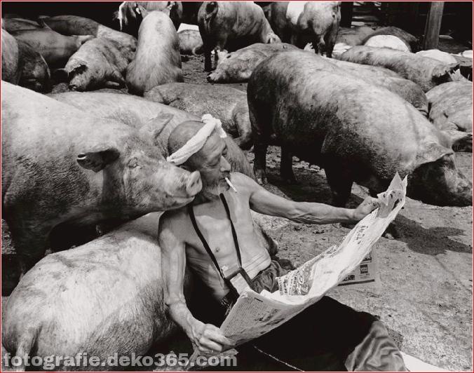 Landwirt und seine Schweine Freundschaft (5)