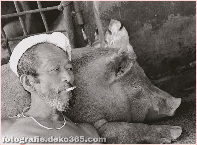 Landwirt und seine Schweine Freundschaft (8)