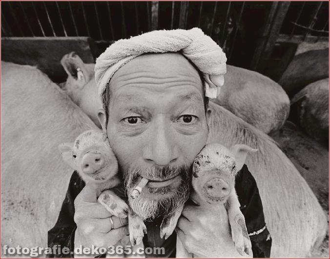 Landwirt und seine Schweine Freundschaft (13)