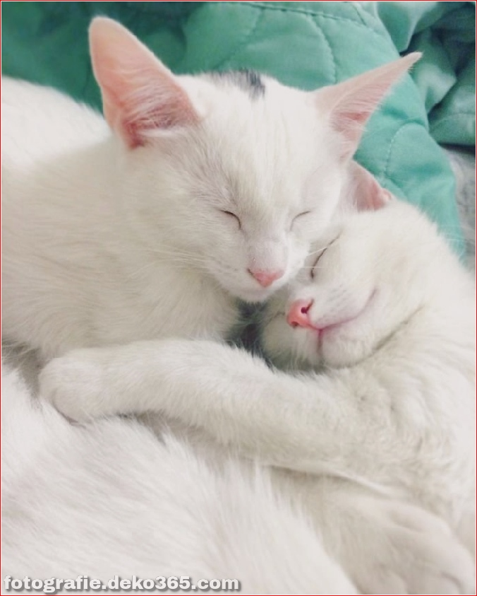 Heterochromatische Augen Katze (7)