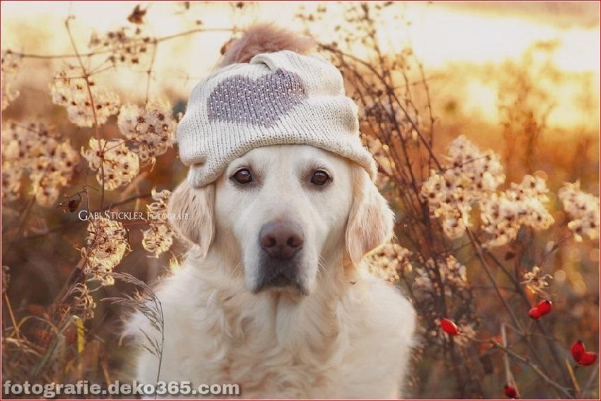Hund glücklich mit Weihnachtstag_5c8ffd550c72d.jpg