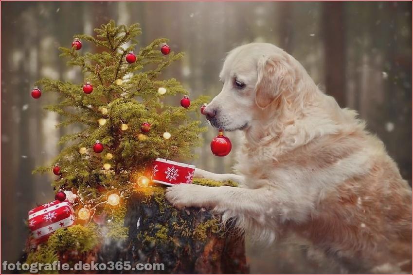 Hund glücklich mit Weihnachtstag_5c8ffd5702d84.jpg