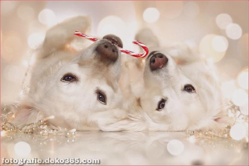 Hund glücklich mit Weihnachtstag_5c8ffd587a10b.jpg