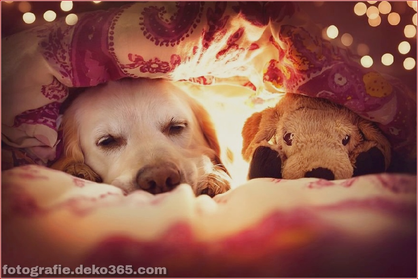 Hund glücklich mit Weihnachtstag_5c8ffd5a11612.jpg