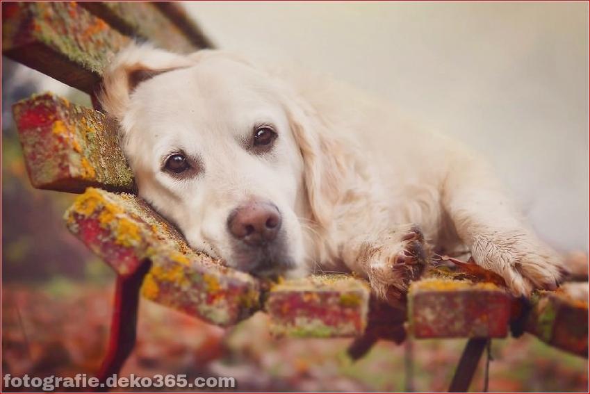 Hund glücklich mit Weihnachtstag_5c8ffd5cbbd29.jpg