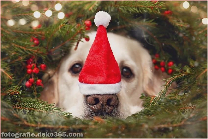 Hund glücklich mit Weihnachtstag_5c8ffd5e8d764.jpg