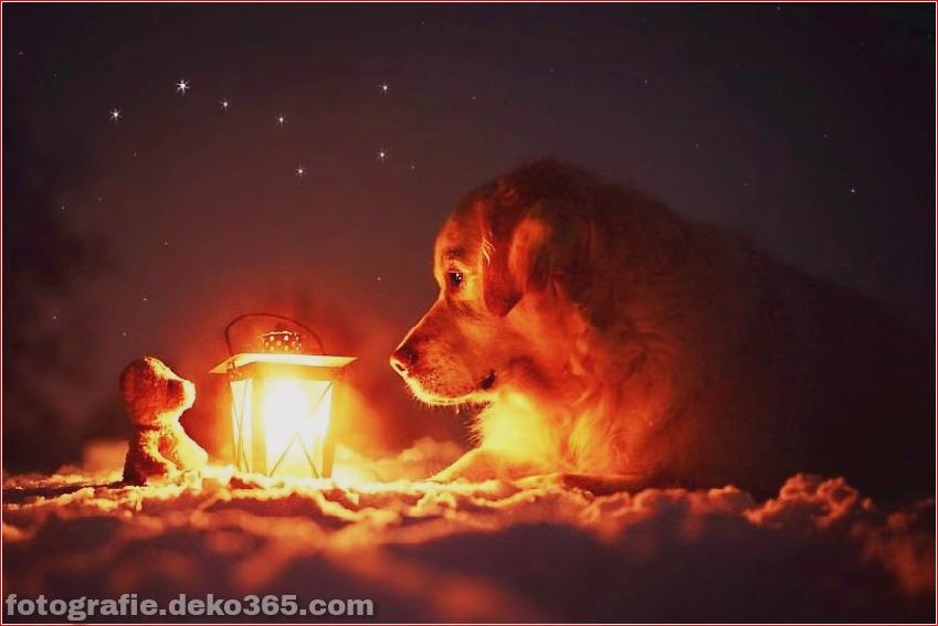 Hund glücklich mit Weihnachtstag_5c8ffd6035517.jpg