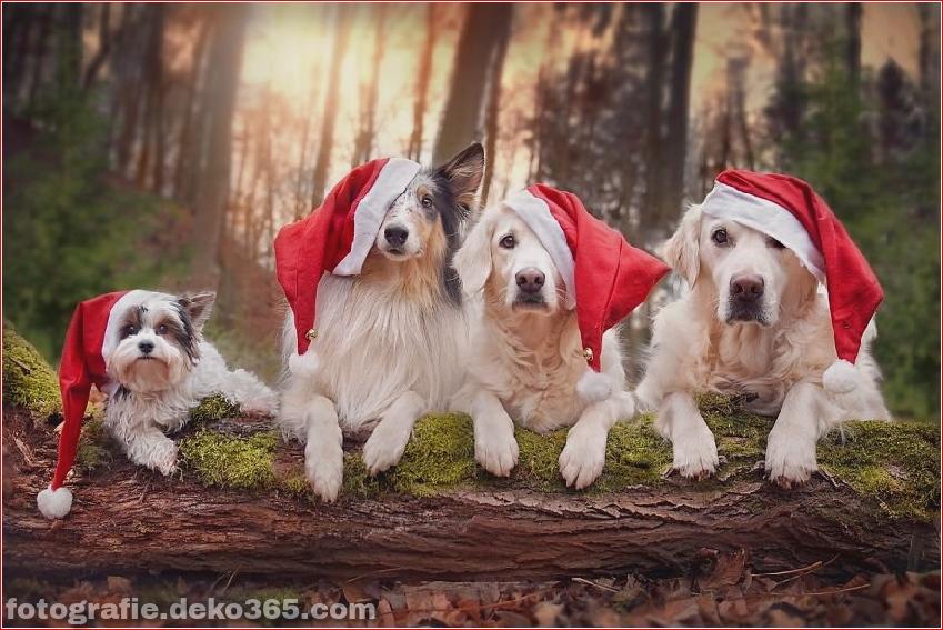 Hund glücklich mit Weihnachtstag_5c8ffd62d5654.jpg