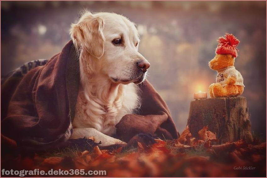 Hund glücklich mit Weihnachtstag_5c8ffd6466fb1.jpg