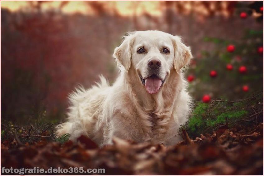 Hund glücklich mit Weihnachtstag_5c8ffd65d4e95.jpg