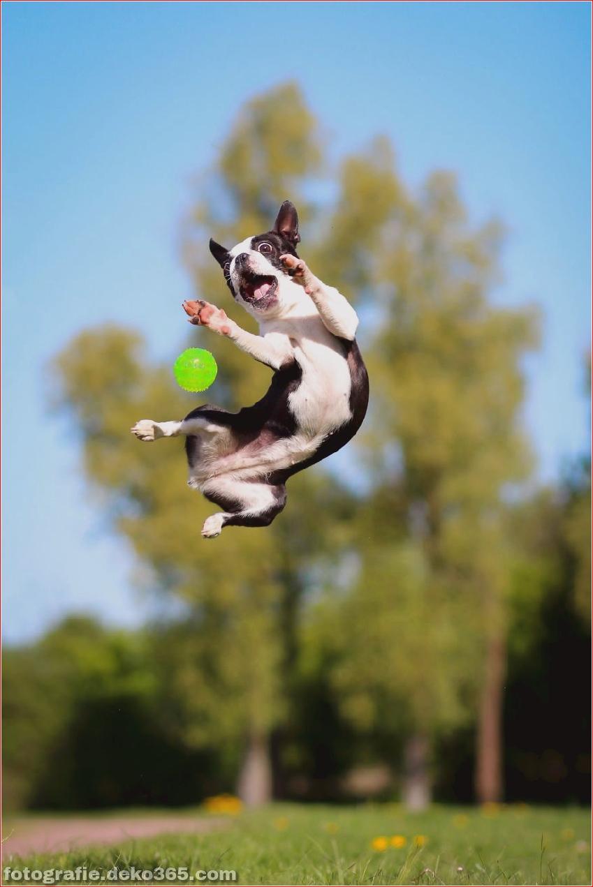 Hund springen_5c9017b8b99cd.jpg