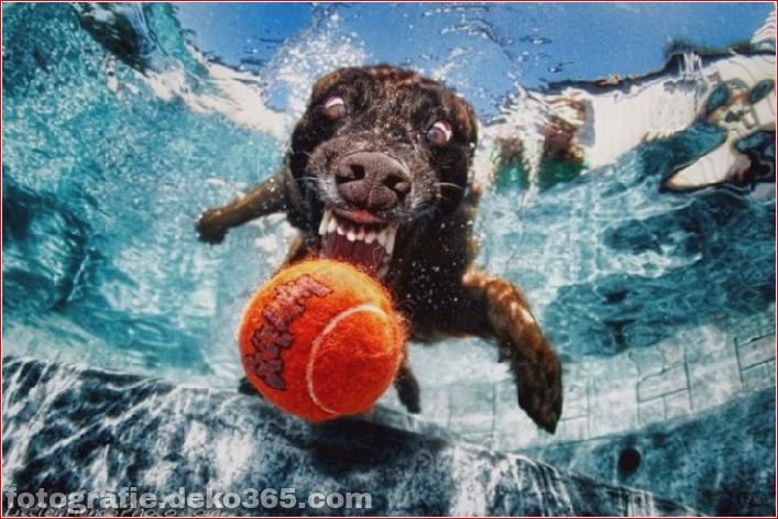 Hund unter Wasserfotografie_5c9063d5f0cd8.jpg