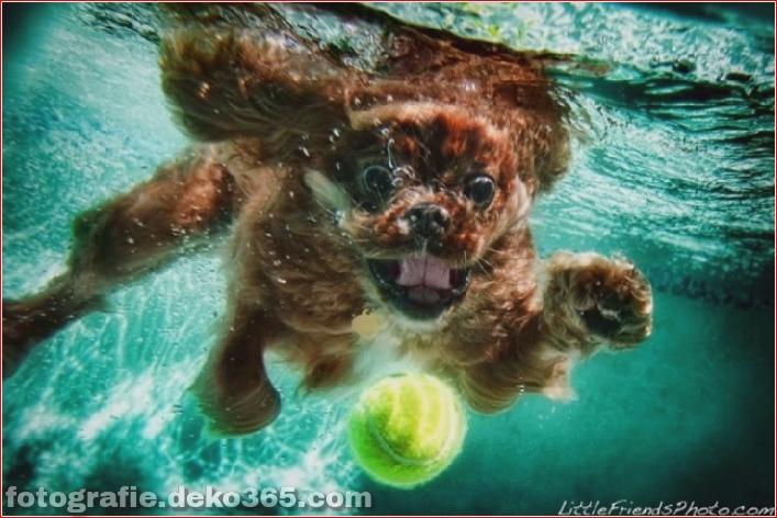 Hund unter Wasserfotografie_5c9063d864bde.jpg
