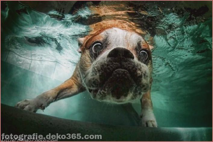 Hund unter Wasserfotografie_5c9063d9864f2.jpg