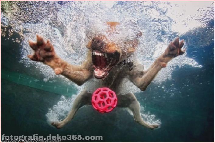 Under water dog