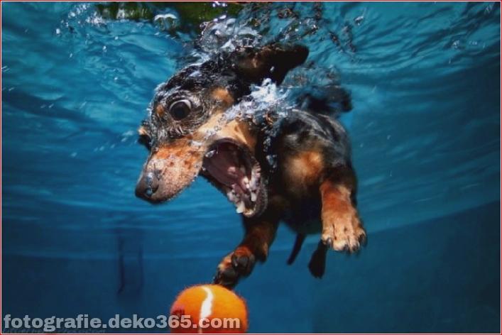 Hund unter Wasserfotografie_5c9063dce3b36.jpg