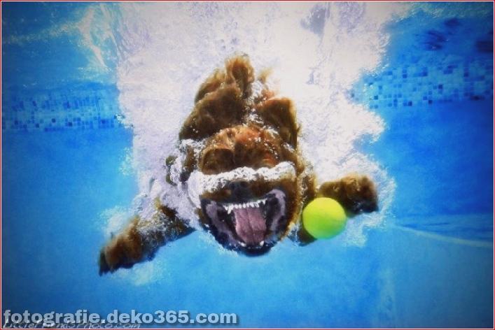 Hund unter Wasserfotografie_5c9063dfe0576.jpg