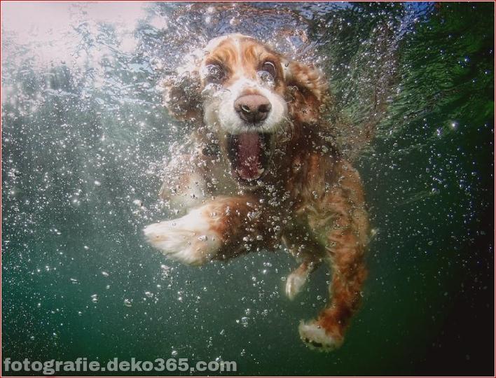 Hund unter Wasserfotografie_5c9063e15abe9.jpg