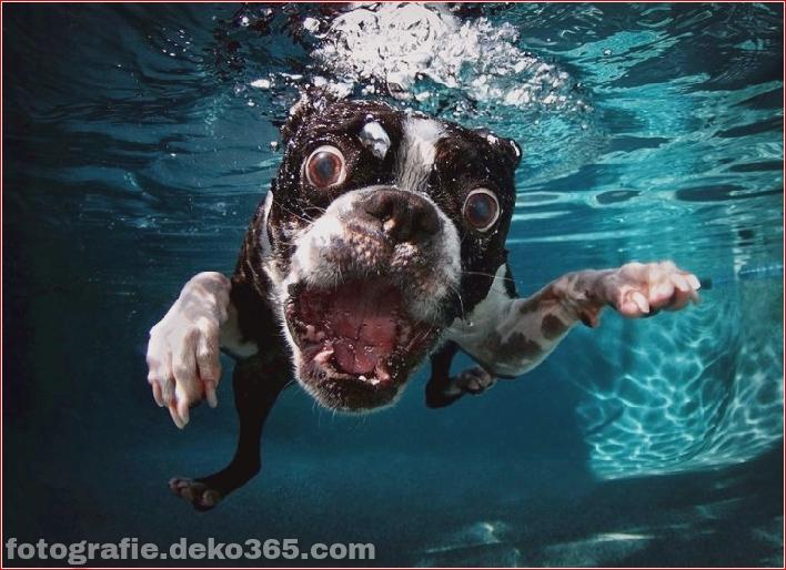 Hund unter Wasserfotografie_5c9063e4115fb.jpg