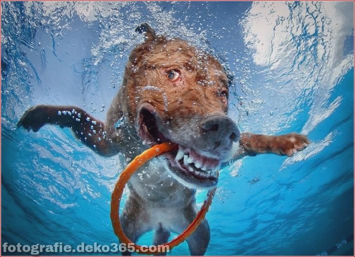 Hund unter Wasserfotografie_5c9063e8361cb.jpg