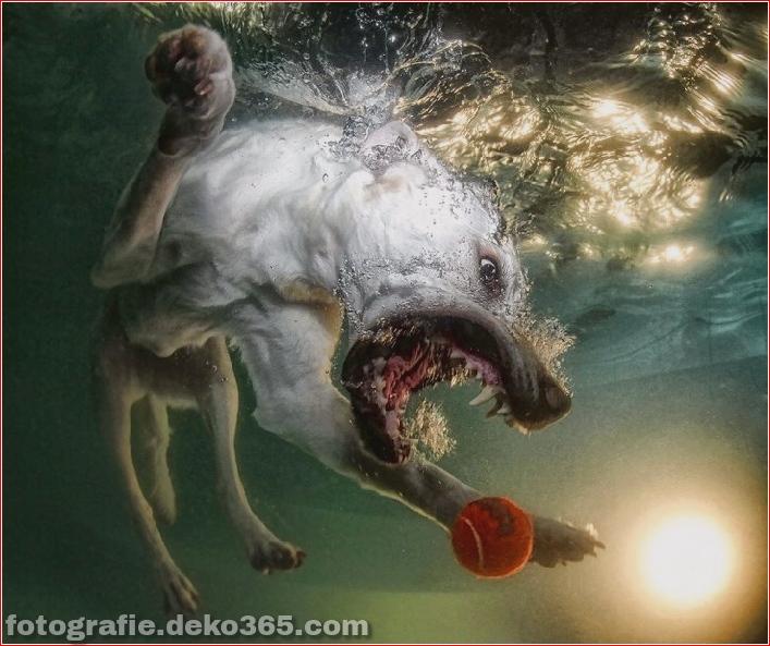 Hund unter Wasserfotografie_5c9063ec498cc.jpg