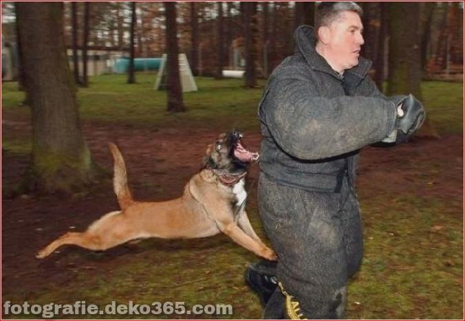 Vorsicht vor Tierangriffen (5)