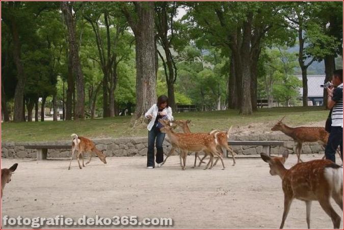 Vorsicht vor Tierangriffen (6)
