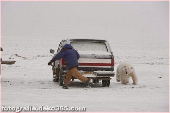 Vorsicht vor Tierangriffen (9)