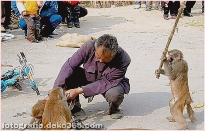 Vorsicht vor Tierangriffen (13)