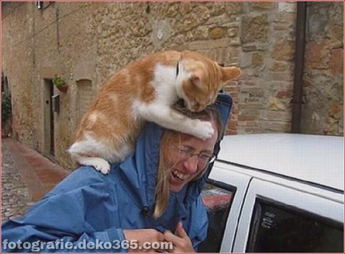 Vorsicht vor Tierangriffen (15)