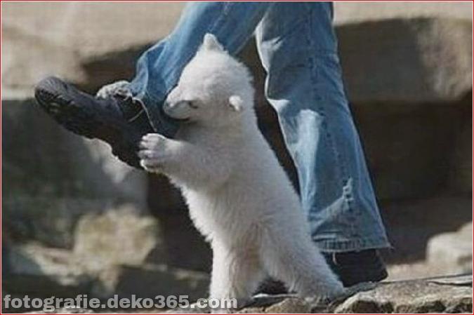 Vorsicht vor Tierangriffen (22)