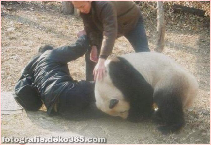 Vorsicht vor Tierangriffen (25)