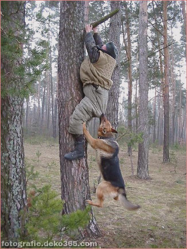 Vorsicht vor Tierangriffen (27)