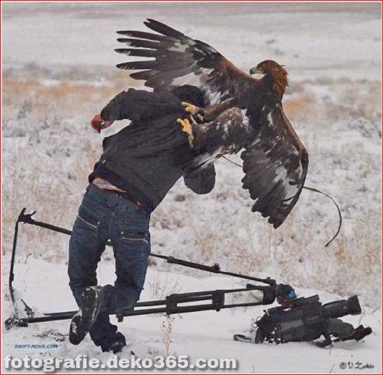 Vorsicht vor Tierangriffen (30)