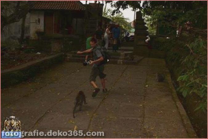 Vorsicht vor Tierangriffen (33)