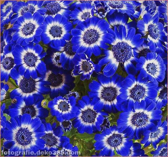 Ich liebe blaue Farbe warum?_5c9057d54019b.jpg