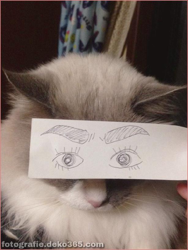 Gefälschte Augen für Katzen (1)