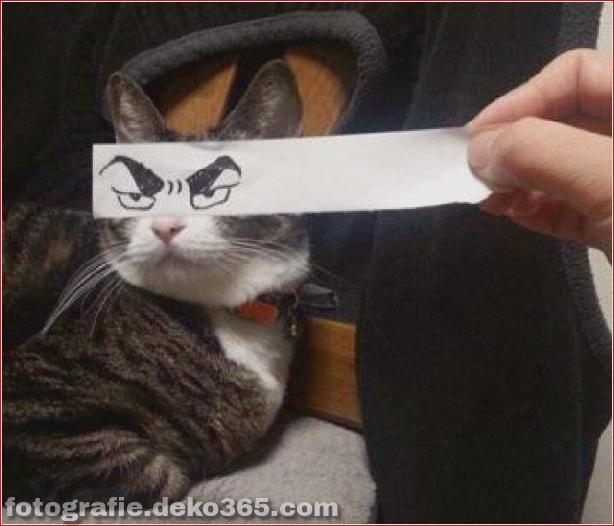 Gefälschte Augen für Katzen (2)