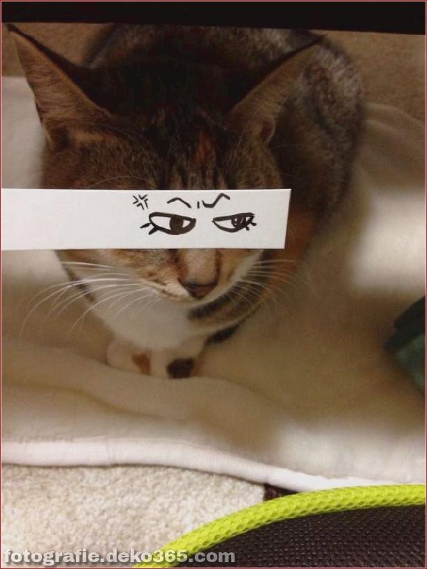 Gefälschte Augen für Katzen (4)