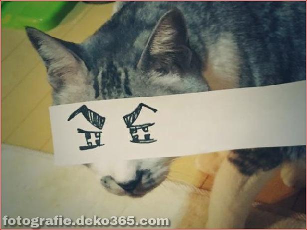 Gefälschte Augen für Katzen (6)