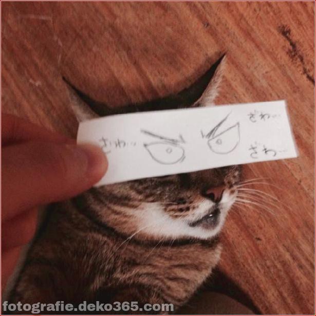 Gefälschte Augen für Katzen (7)