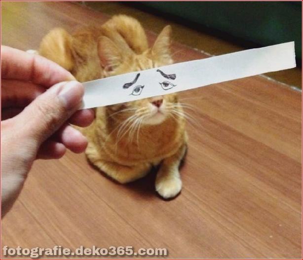 Gefälschte Augen für Katzen (8)