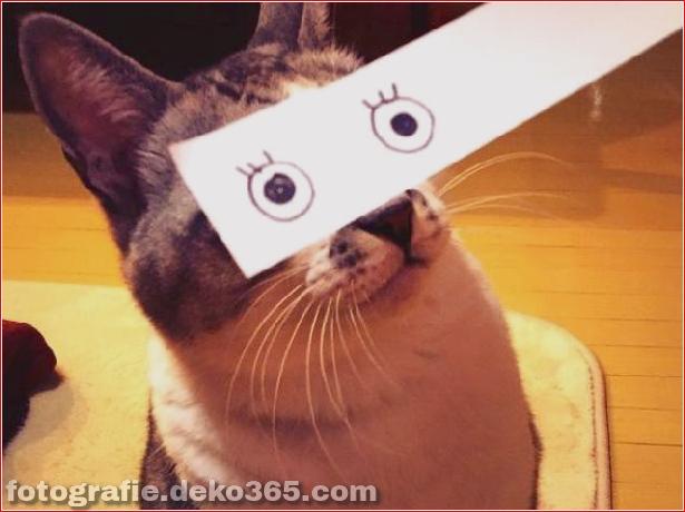 Falsche Augen für Katzen (10)