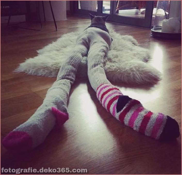 Katzen mit Strumpfhosen sind viel lustiger als Hunde mit Strumpfhosen (2)